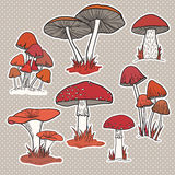Vector set with isolated mushrooms Stock Images