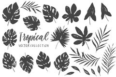 Vector set with isolated textured hand drawn leaves on white background. Vector tropical palm leaves, jungle, split leaf, philodendron, monstera. Jungle trees Royalty Free Stock Images