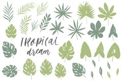 Vector set with isolated textured hand drawn leaves on white background. Vector tropical palm leaves, jungle, split leaf, philodendron, monstera. Jungle trees Stock Photography