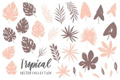 Vector set with isolated textured hand drawn leaves on white background. Vector tropical palm leaves, jungle, split leaf, philodendron, monstera. Jungle trees Stock Images