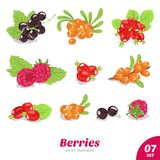 Vector set of juicy berries Stock Photography