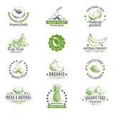 Vector set of labels, logos and hand drawn design Stock Image