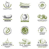 Vector set of labels, logos and hand drawn design. Vector set of labels, badges and hand drawn design elements with vegetables. Logo collection Stock Photos