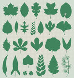 Vector Set: Leaf Silhouettes Royalty Free Stock Image