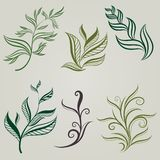 Vector set of leafs design element Stock Photos