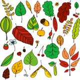 Vector set of leaves Royalty Free Stock Photo