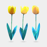 Vector set of low poly style flowers tulip. Polygon flower vector illustration. Logo design. Vector set of low poly style flowers tulip. Polygon flower vector Stock Image