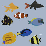 Vector set of marine animals. Sea life. Flat style Stock Photography