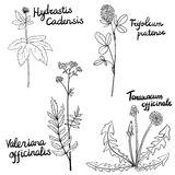 Vector set of medical plants Stock Photography
