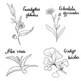 Vector set of medical plants Royalty Free Stock Images