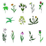 Vector set of medical plants Royalty Free Stock Photography