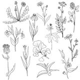 Vector set of medical plants Stock Images
