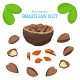 Vector set of nuts. Brazil nut fruit, whole, peeled, piece  half, walnut in shell, leaves. Stock Photos