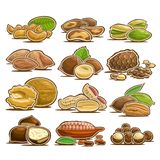 Vector set of Nuts stock illustration