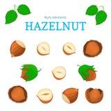 Vector set of nuts. Hazelnut nut fruit, whole, peeled, piece  half, walnut in shell Stock Photo