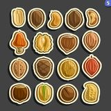 Vector Set of Nuts icons vector illustration