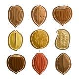 Vector Set Nuts Logo. Pecan almond hazelnut filbert pistachio walnut peanut groundnut chestnut cocoa brazil nut; abstract primitive simplistic nuts logo or Royalty Free Stock Images