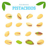 Vector set of nuts. Pistacia nut fruit, whole, peeled, piece  half, walnut in shell, leaves. Collection  pistachio Royalty Free Stock Image