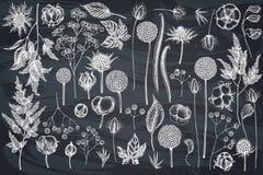 Free Vector Set Of Hand Drawn Chalk Astilbe, Craspedia, Blue Eryngo, Lagurus, Cotton, Gypsophila Stock Photo - 151906770