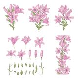 Vector Set Of Light Pink Lily Flowers Isolated On White Royalty Free Stock Image