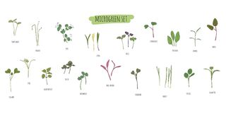 Free Vector Set Of Microgreens. Herbs - Pea, Sunflower, Onion, Peas, Corn, Basil, China Rose, Spinach, Fennel, Sorrel, Collard, Dill, Royalty Free Stock Photography - 201320547