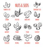Vector Set Of Nuts And Seeds Illustrations Royalty Free Stock Photo