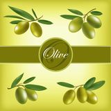 Vector set of olive branches.  Vector Illustration