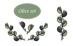 Olive branches set in color. Vector set with olive handrown elements. Editable set for packaging design with olive branches. Black and green olives vector illustration