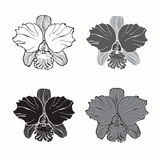 Vector set of  orchids   on white background. Monochrom. Orchids, different variants. Vector monochrome illustration of elements for design Stock Image