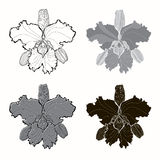 Vector set of  orchids   on white background. Monochrom. Orchids, different variants. Vector monochrome illustration of elements for design Stock Photo