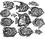 Vector set of Ornamental decorative fish