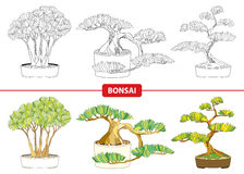 Vector set with ornate Bonsai tree in black and in color on white background. Stock Illustration