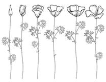 Vector set with outline California poppy flower or California sunlight or Eschscholzia, leaf, bud and flower in black isolated. Vector set with outline royalty free illustration
