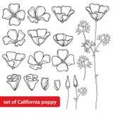 Vector set with outline California poppy flower or California sunlight or Eschscholzia, leaf, bud and flower in black isolated. Vector set with outline vector illustration