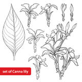 Vector set with outline Canna lily or Canna, flower bunch, bud and leaf in black isolated on white background. Floral elements. Stock Image