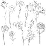 Vector Set of Outline Flowers Stock Photos