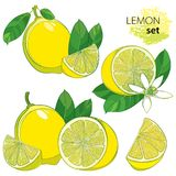 Vector set with outline half and whole fruit, slice, leaf and Lemon flower isolated on white background. Composition with tropical yellow citrus Lemon in Stock Images