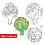 Vector set with outline head of Artichoke or Cynara isolated on white background. Vegetable culture in contour style for food design and coloring book. Hand Stock Image