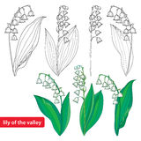 Vector set with outline Lily of the valley or Convallaria flowers and leaves isolated on white. Ornate floral element with flowers Royalty Free Stock Photos