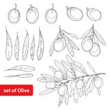 Vector set with outline Olive, bunch, fruit and leaves in black isolated on white background. Olive branch in contour style. Stock Photography