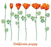 Vector set with outline orange California poppy flower or California sunlight or Eschscholzia, green leaf and bud isolated. Vector set with outline orange vector illustration