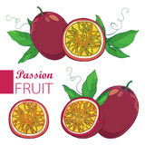 Vector set with outline Passion fruit or Maracuya. One and half fruit, leaf and flower isolated on white background. Stock Images