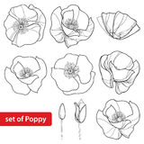 Vector set with outline Poppy flower, bud and open flowers isolated on white background. Floral elements in contour style. Stock Images