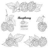 Vector set with outline Raspberry bunch, berry, flower and leaves in black  on white background. Raspberry composition. Royalty Free Stock Photo