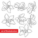 Vector set with outline Rhododendron or Alpine rose flower  Royalty Free Stock Image