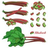 Vector set with outline Rhubarb or Rheum vegetable in red and green isolated on white background. Contour cut and whole pieces. Vector set with outline Rhubarb Royalty Free Stock Photos