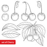 Vector set with outline ripe Cherry, bunch, berry and leaves on white background. Ornate floral elements with cherry. Vector set with outline ripe Cherry, bunch royalty free illustration