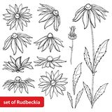 Vector set with outline Rudbeckia hirta or black-eyed Susan flower bunch, ornate leaf and bud in black isolated on white back. Vector set with outline Rudbeckia royalty free illustration