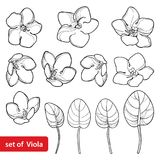 Vector set with outline Saintpaulia or African violet flower and leaf in black isolated on white background. Viola flowers. Stock Photos