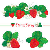 Vector set with outline Strawberry, bunch of red berry, ornate flower and green leaves  on white. Fruit element with berry Royalty Free Stock Photography